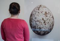Photo of person looking at large egg