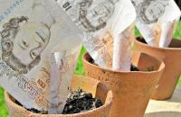 Photo of money in plant pots