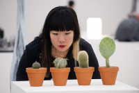Photo of someone looking at a cactus