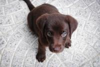 Photo of puppy