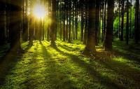 Photo of the sun rising through a forest