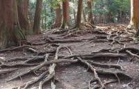 Photo of roots