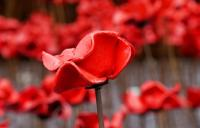 A photo of a ceramic poppy