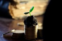 Photo of money growing