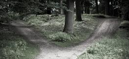 Photo of fork in the path in the woods