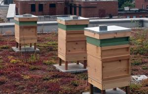 Photo of beehives on top of the Lyric Hammersmith by Omari Daniel