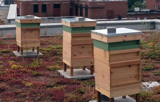Photo of beehives on top of the Lyric Hammersmith