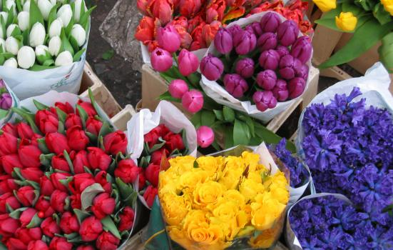 Five colourful bunches of flowers