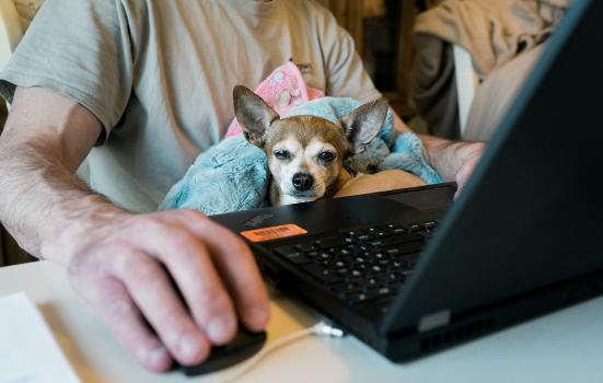 small dog sitting on the lap of an unidentified person working on a laptop computer