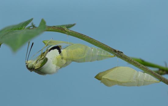 Caterpillar on a leaf