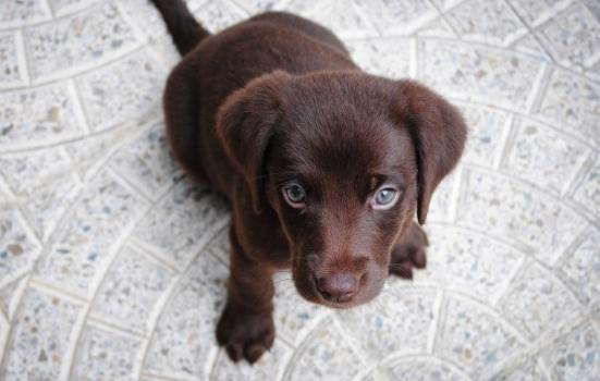 Photo of puppy