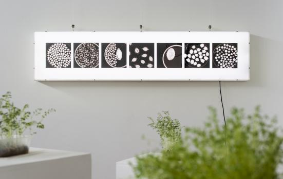 Image of Seed to Seed exhibition