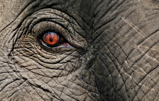 an elephant in close-up