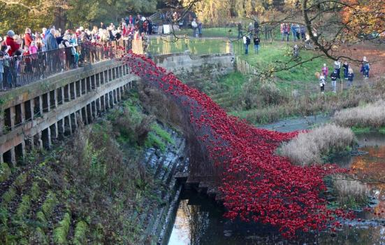 Photo of poppies installation at Yorkshire Sculpture Park